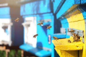 Bees landing at a row of sunlit hives.