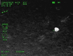 Infrared camera image showing small white bear amid dark background.