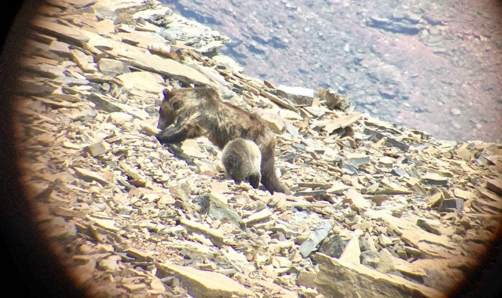 A bear and cub dig on a rocky slope, viewed through a spotting scope.