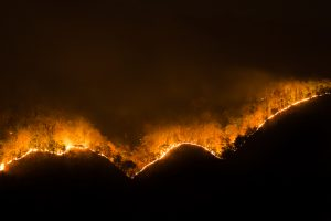 Wildfire burning trees along the crest of a dark hill, at night.