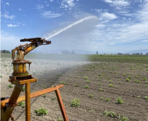 Irrigation system sprays water over earthen field.