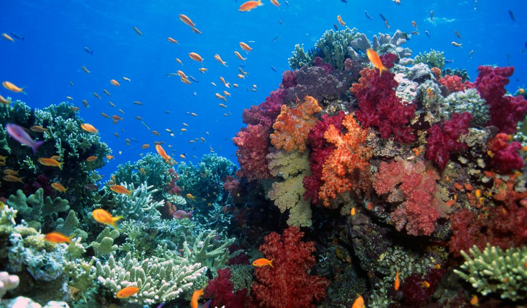 Colorful coral gardens with brightly colored fish