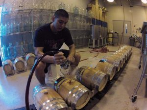 A young man sits over a row of wooden wine barrels, pouring wine into the barrels using a funnel.