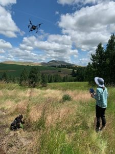 A drone flys low over a grassy field near a woman holding a small remote control.