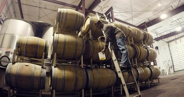 A man stands on a ladder and takes a sample of wine as it flows from a stack of barrels.