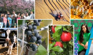 Collage of images featuring students, cows, wheat fields, honey bees, apples, and blueberries.